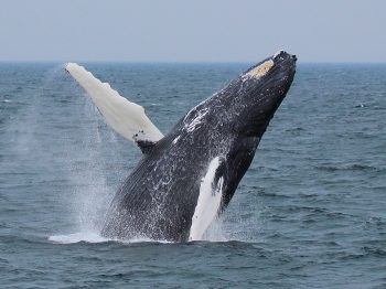 Hyannis Whale Watcher Cruises (7 Day Weather Forecast For