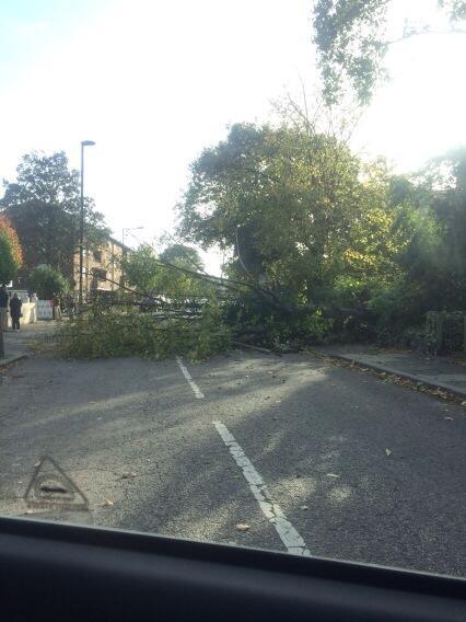 Tree down South London