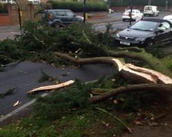 UK Storm - fallen tree